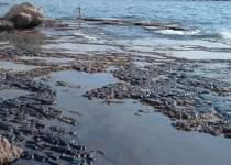 محیط زیست بوشهر از شرکت نفتی آلوده کننده دریا شکایت کرد | نفت آنلاین