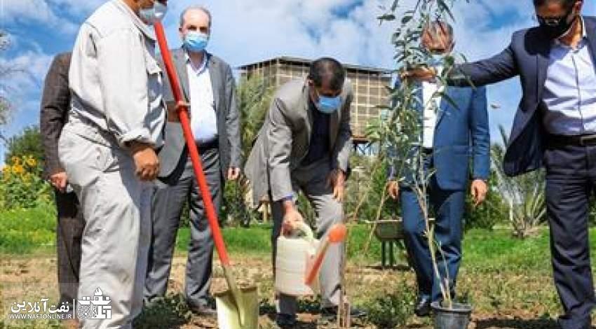 روز  درختکاری در شرکت بهرهبرداری نفت و گاز مارون