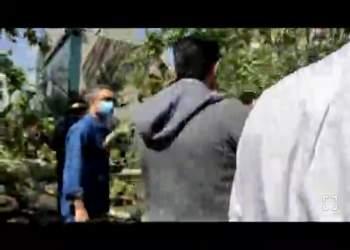 سقوط درخت بر روی خودروها در تهران