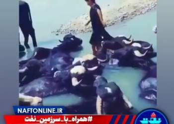 خوزستان و بی آبی | نفت آنلاین